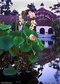 A second shot of the reflecting pond at the Botanical Building located in Balboa Park. San Diego, CA 'Nikon F100 35mm SLR' (Click for larger view)