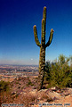 When you think of the desert, don't you imagine a cactus that looks like the one overlooking the Valley of The Sun? Phoenix, AZ. 'Nikon F100 35mm SLR' (Click for larger view)