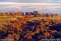 Late afternoon / early evening hillside view. Rocklin, CA 'Minolta X-700 35mm SLR' (Click for larger view)