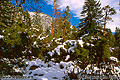 This snow scene was found while walking on the path leading to Bridalveil falls in the mid-afternoon. 'Nikon F100 35mm SLR' (Click for larger view)